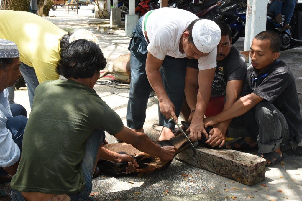 Hari Raya Idul Adha,Pemkab Bengkalis Sembelih 37 Ekor Sapi dan 15 Ekor Kambing