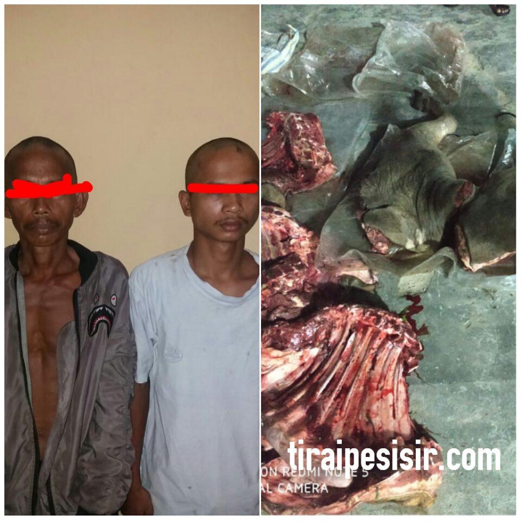Dua Pencuri Lembu Diamankan Polsek Kampung Rakyat