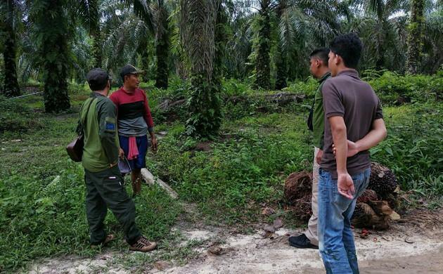 Viral di Medsos: BBKSDA Riau Turunkan Tim Pastikan Jejak Harimau
