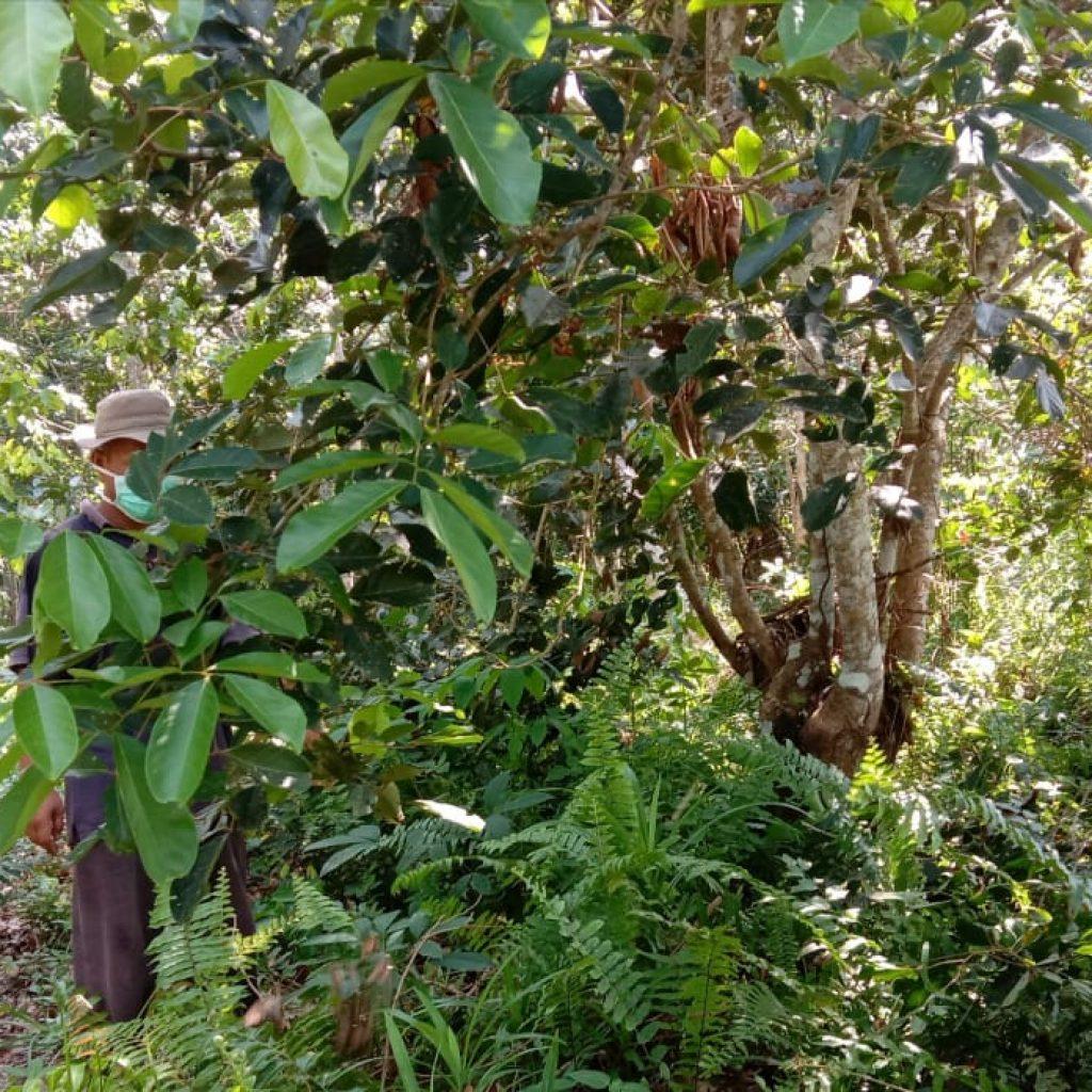 Ditengah Pandemik Covid-19, Babinsa Koramil 02 Tebing Tinggi Terus Laksanakan Patroli Karhutla di Desa Binaan