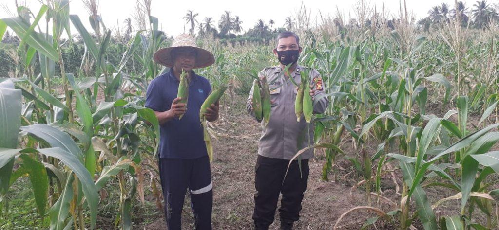 Polsek Tebingtinggi Barat Panen 150 Kg Jagung Program Jaga Kampung