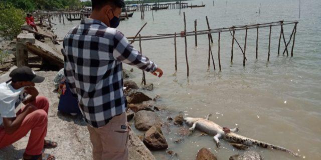 Seekor Buaya Ditemukan Mati di Perairan Mekong