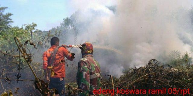 2 Lahan Semak Belukar Di Pulau Rupat Bengkalis, Ludes di Lalap si Jago Merah