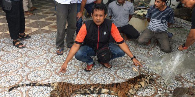 Mantap,.Polda Riau Ungkap Kasus Perdagangan Organ Harimau Sumatera Di Indragiri Hulu