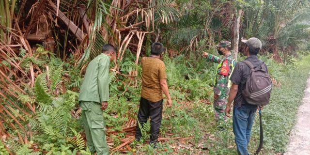 Upaya Pencegahan Karhutla, Babinsa Koramil 02 Tebing Tinggi Bersama MPA dan Linmas Patroli di Desa Tenan