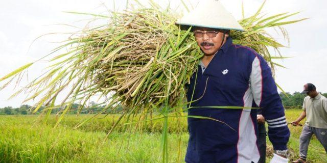Gubernur Kepri,H.Nurdian Basirun,Panen Padi di Poyotomo,Kepri Harus Unggul di Semua Sektor